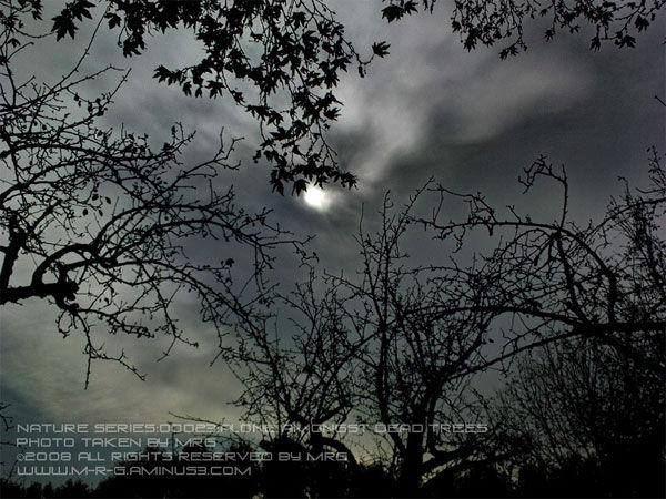 alone amongst dead trees [023]