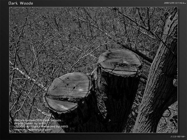 dark woods [065]