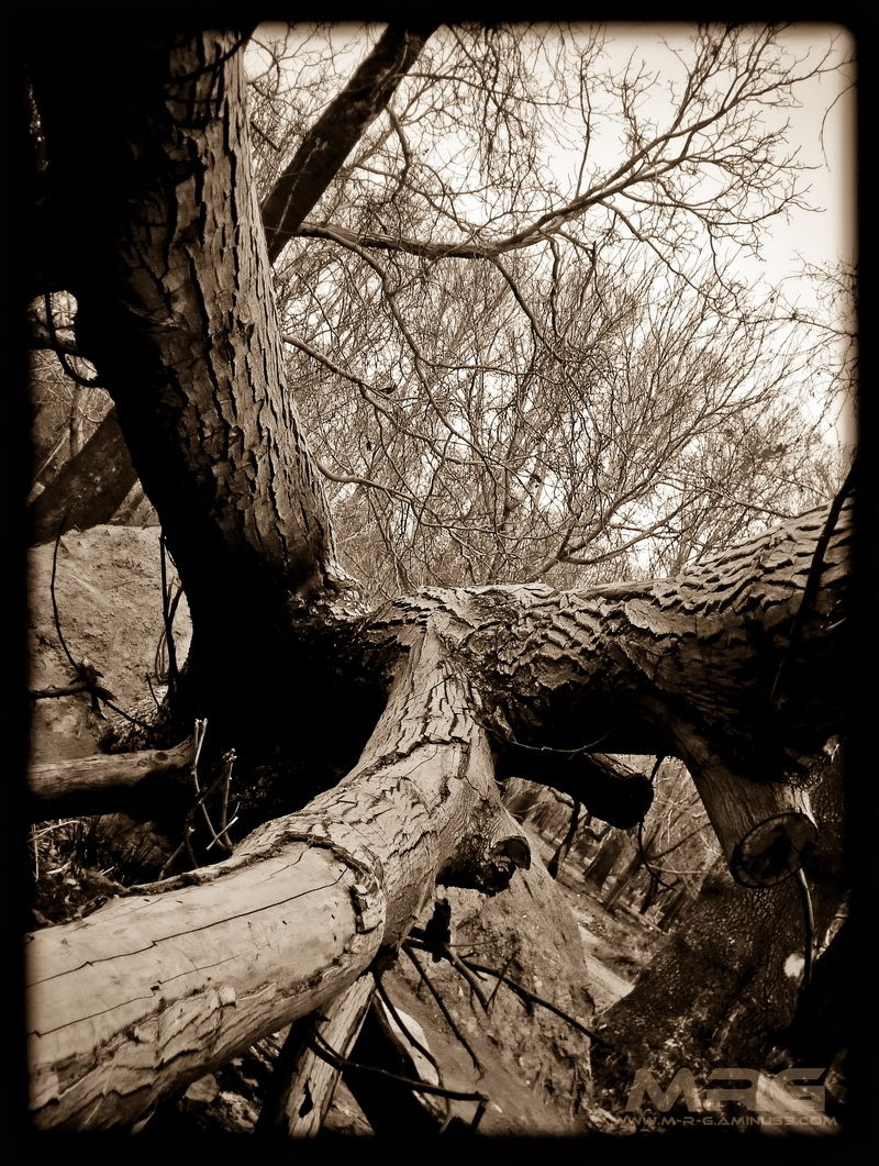 Dejected Tree [112]