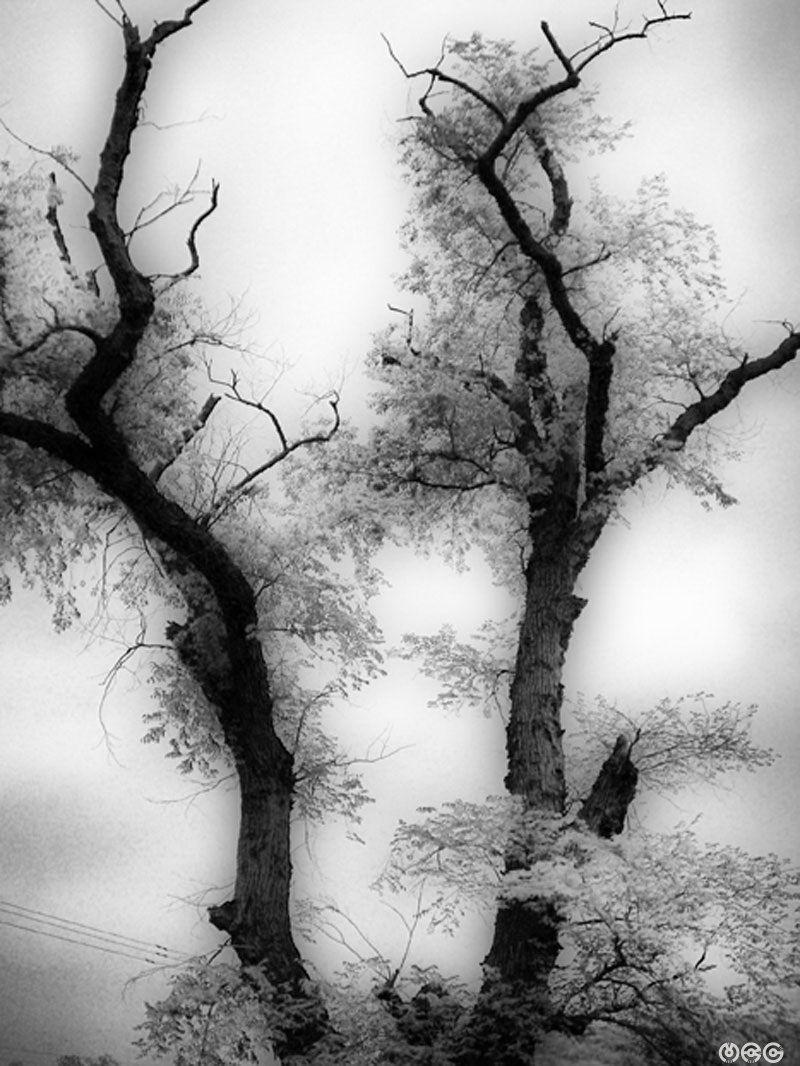 """""""...White Tree..."""""""