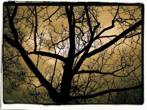 """... Lunatic Tree ..."""