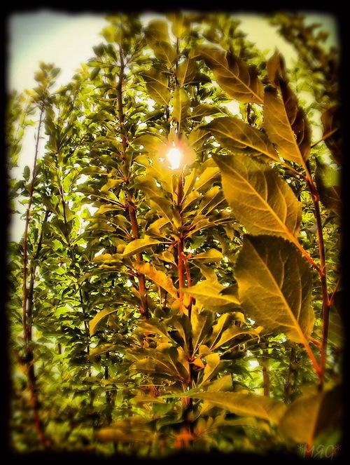Sun Gazing*