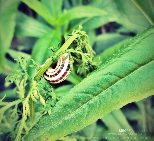 Magic Snail - 1
