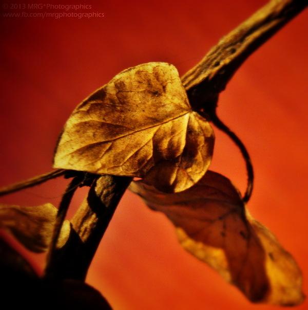 Autumnal Theme * 3