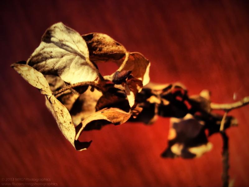 Autumnal Theme * 6