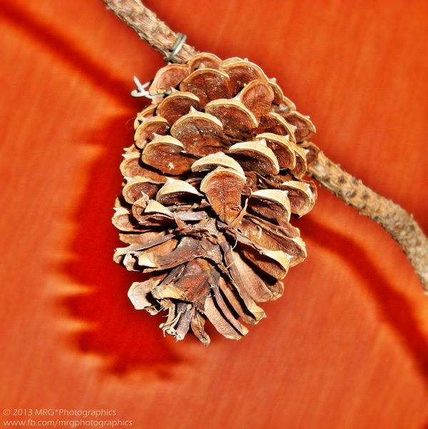 Autumnal Theme * 7