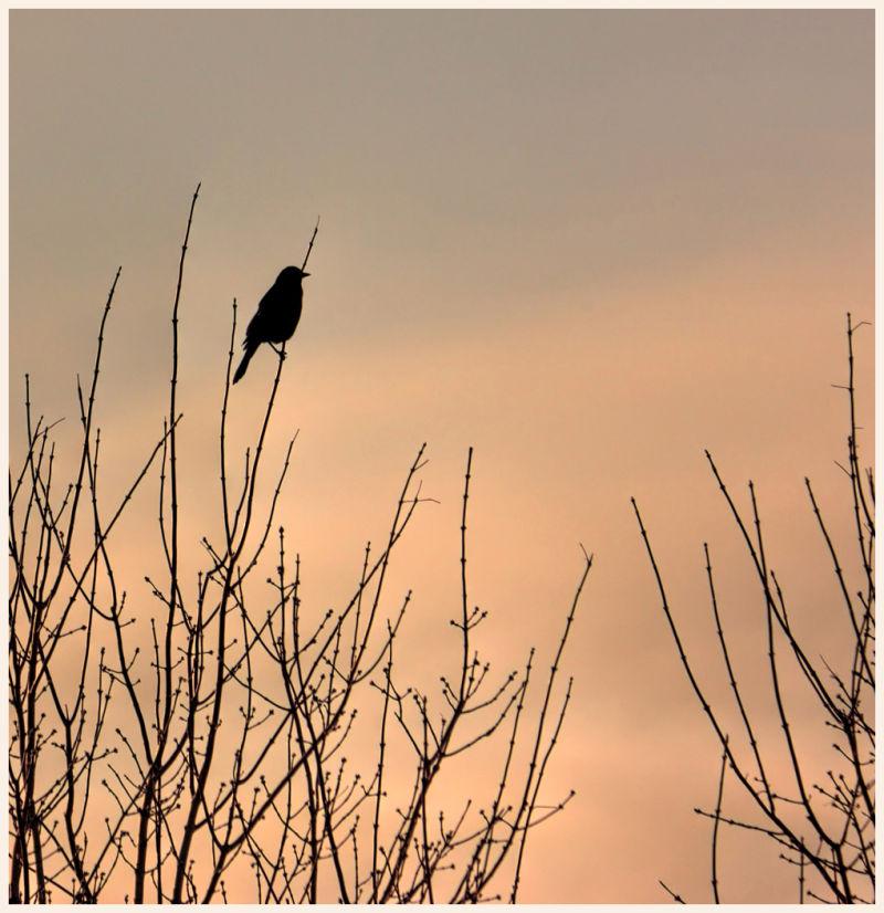 prairie sunrise
