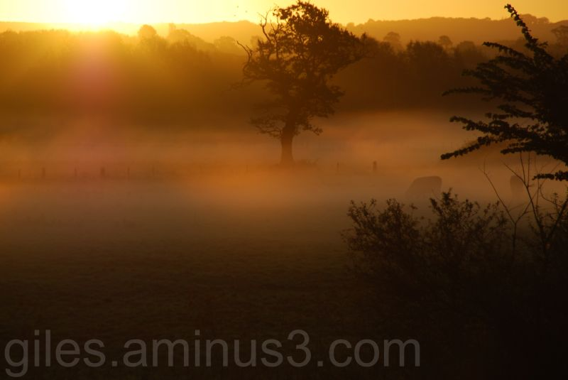 Misty Morning near the River Clyst, Devonshire