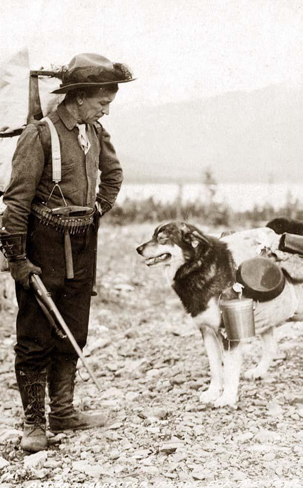 An Alaskan Pack Dog