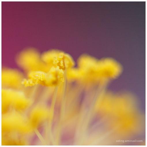Flower*~