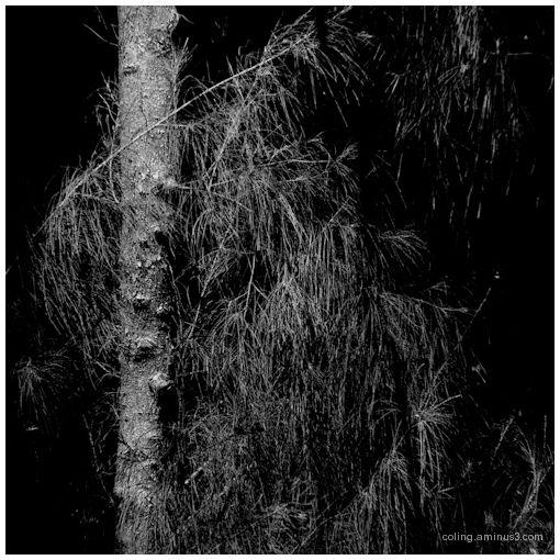 Tree-scape