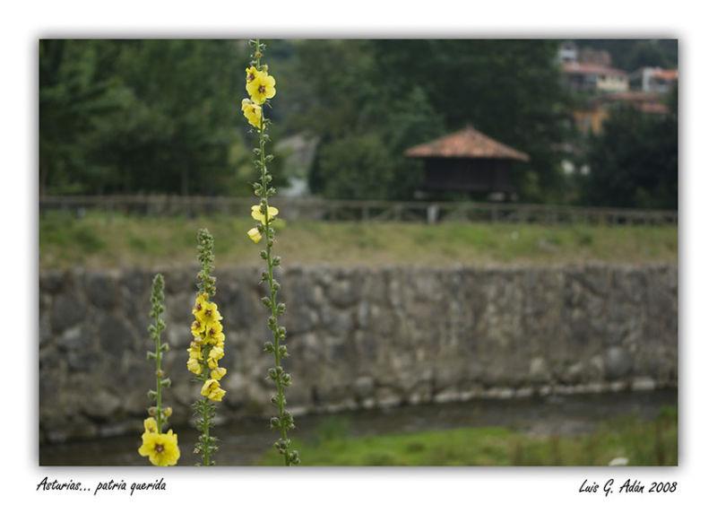 Asturias.....patria querida