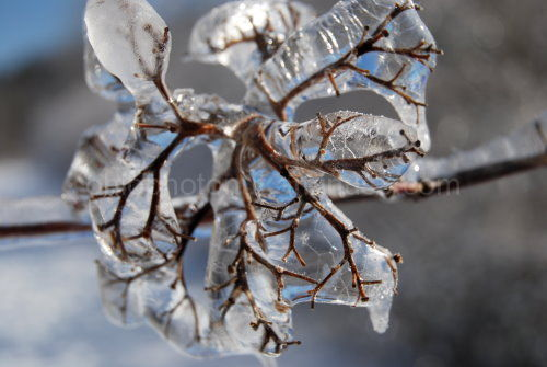 Midwest Ice Storm