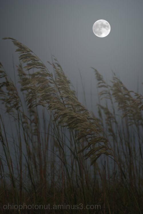 Outer Banks, North Carolina, Sea Grass, Full Moon