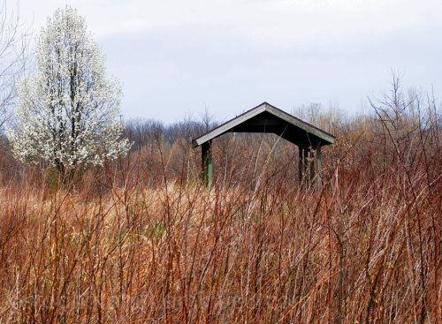 Three Creeks Metro Park, Spring in Ohio, Flowering
