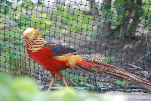 Birds, Columbus Zoo, Fowl