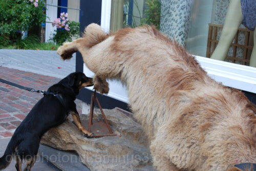 Stuff Animal, Rescue Dog