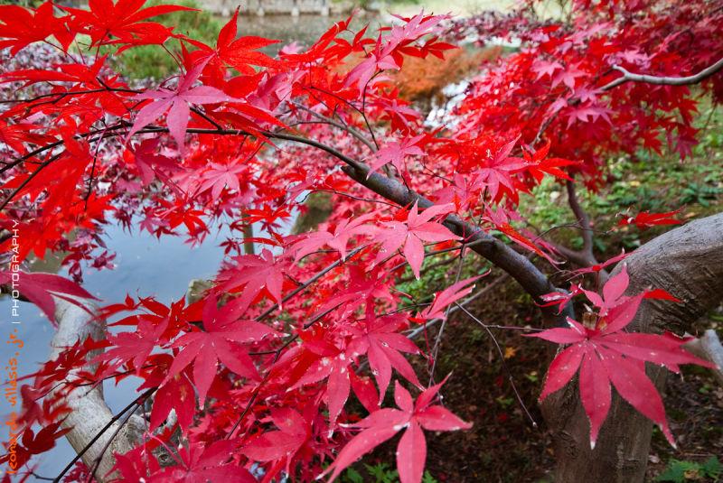 Autumn at Sankeien Garden II