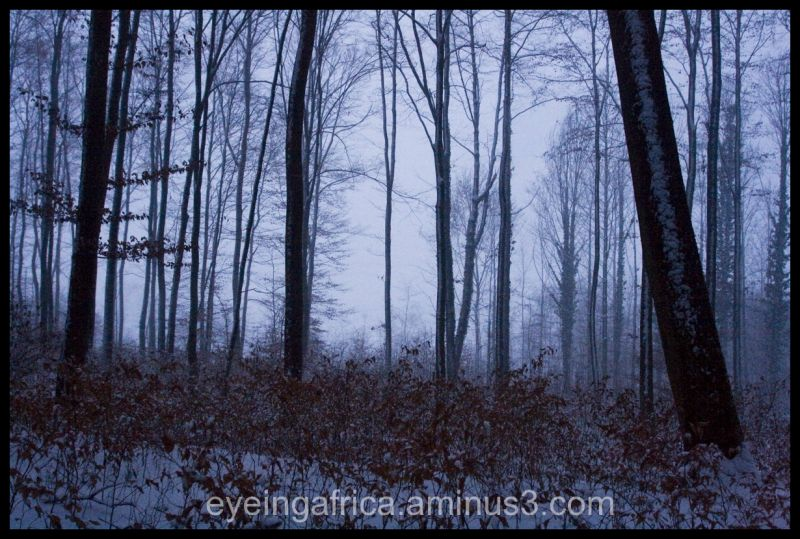 snowy blackforest