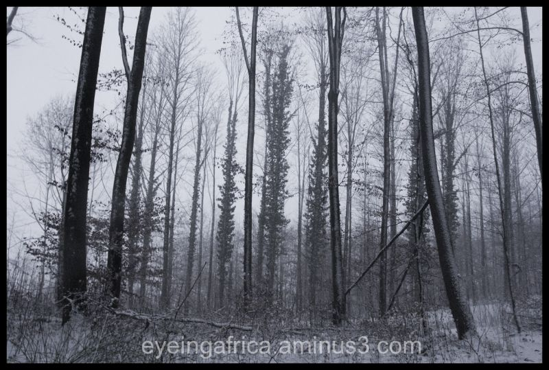 The Blackforest in Snow