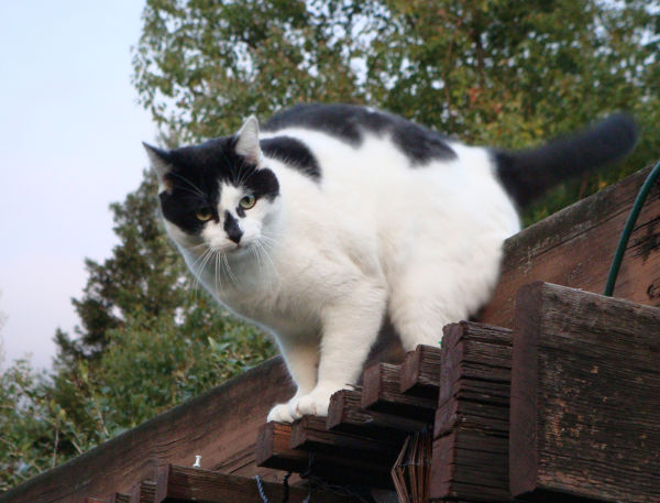 Ollie on the patio roof