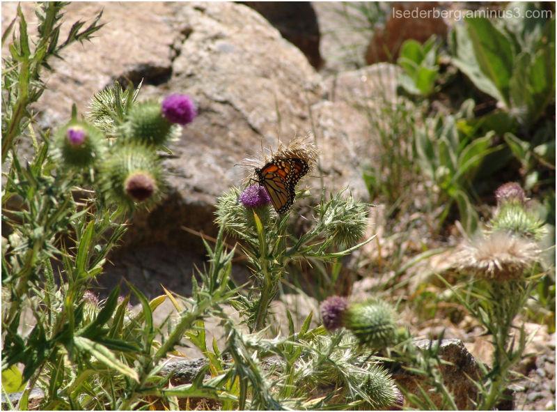 Butterfly at Warner Creek