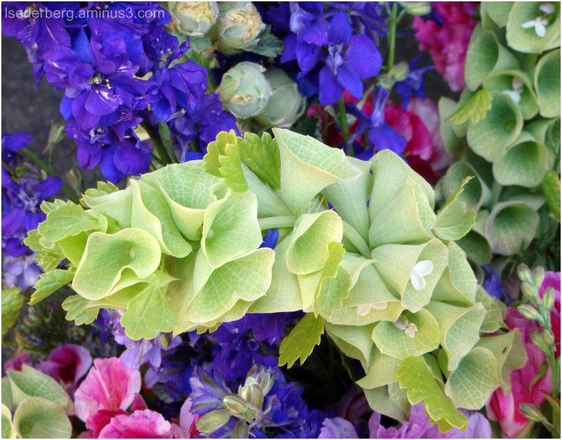 Green Bell Flowers