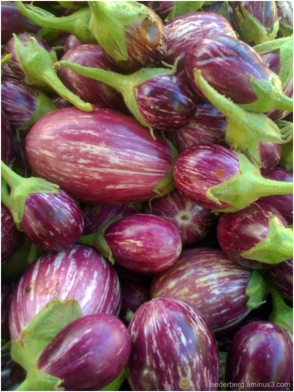Eggplant at the Farmers Market