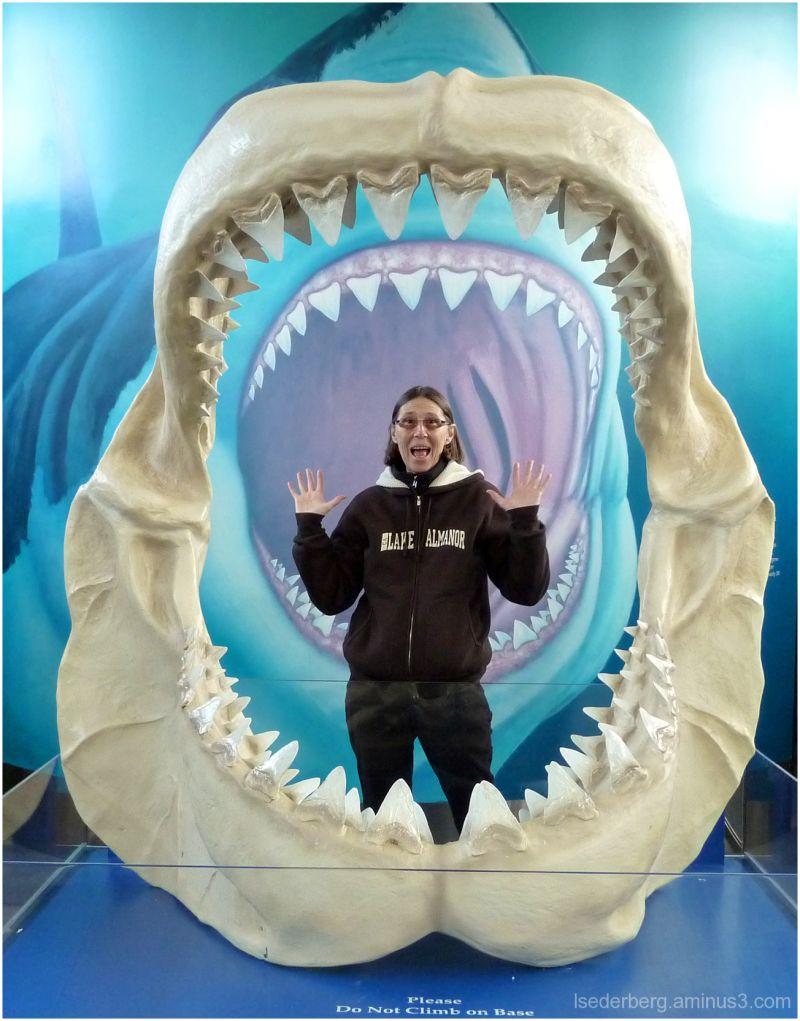Silly Sharks