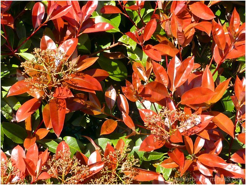 Shiny Leaves