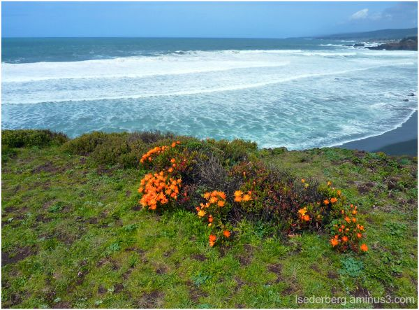 Sea Ranch Beach and Flowers