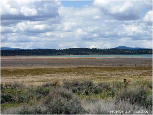 Antelope near Eagle Lake