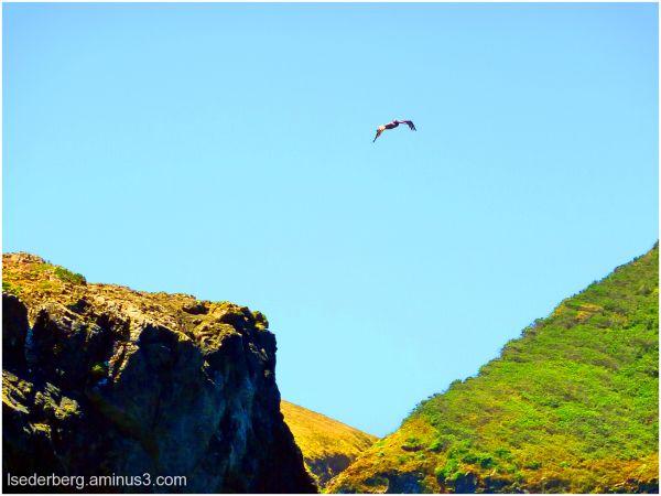 Buckhorn Pelican 2