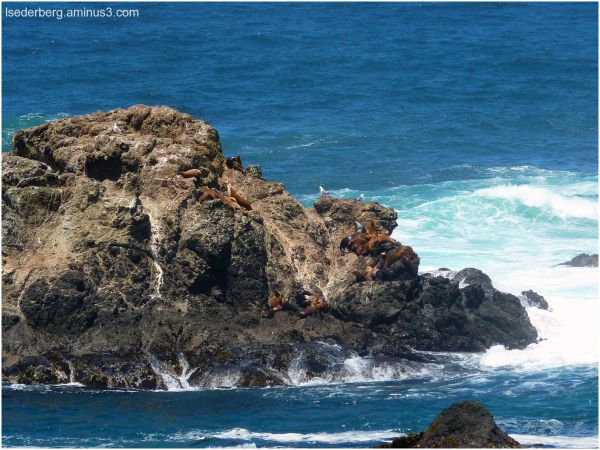 Caspar Beach Seals