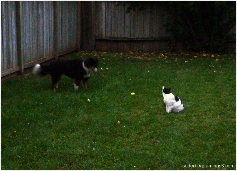 taffy ollie backyard