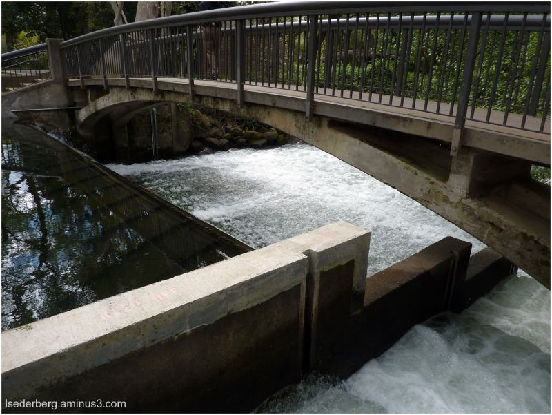 Fish Ladder at One-Mile