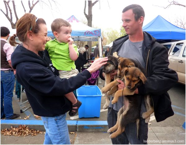 puppies and farmers market
