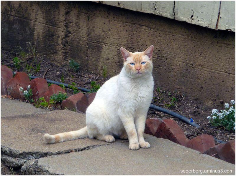 Delbert's cat