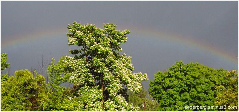 Rainbow over Chico