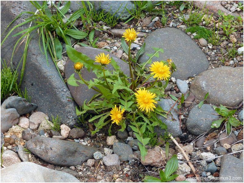 Weeds at Deer Creek