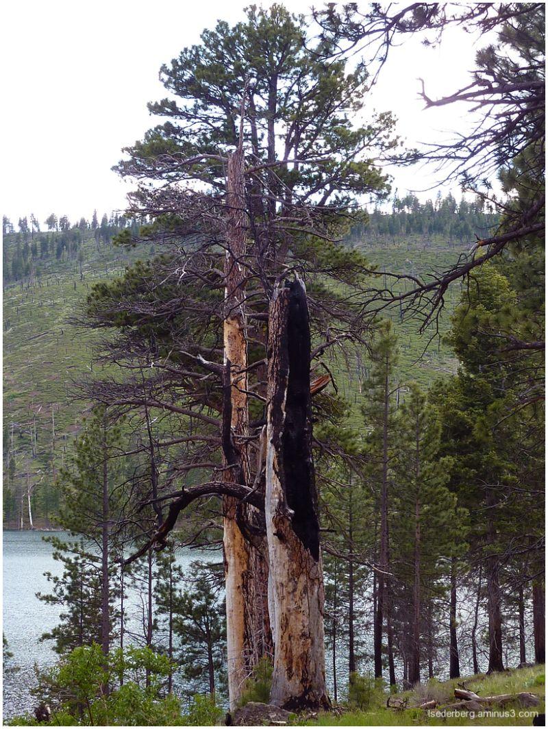 Blue Lake dead trees