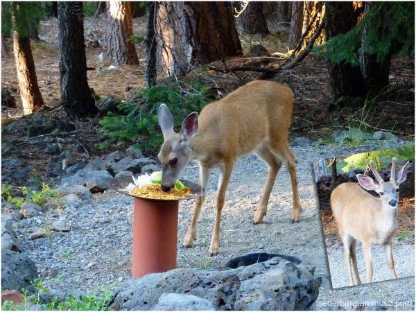 Sara's deer