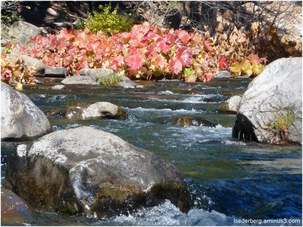 Fall at Deer Creek