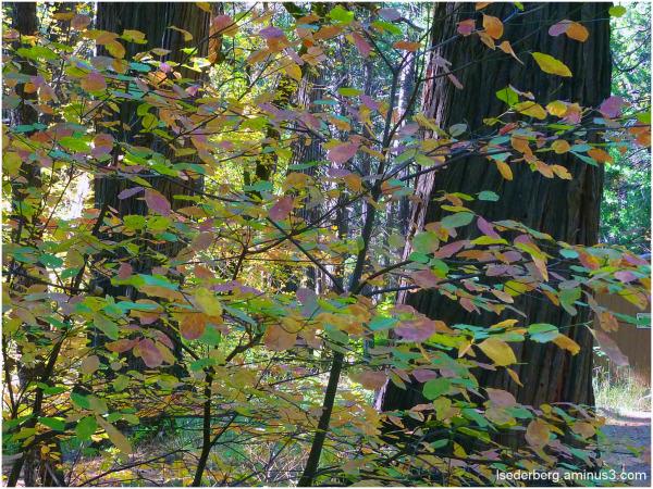 Fall leaves, dogwood