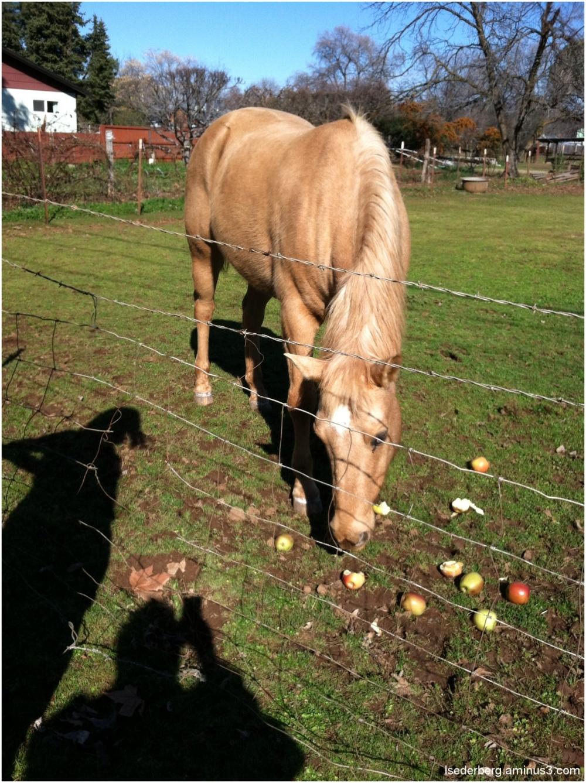 horse goldie