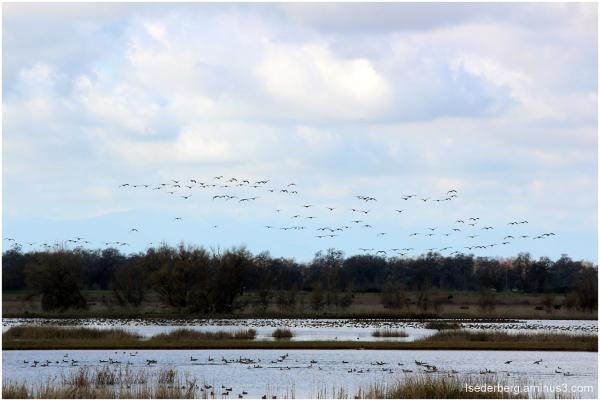 Llano Seco Wildlife Refuge