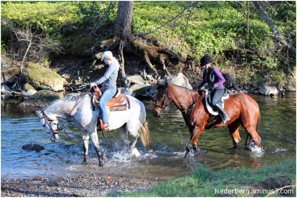 Horses in the creek