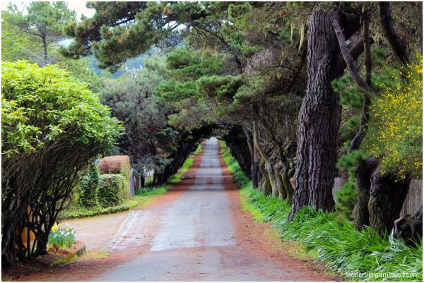 Mendocino road 2