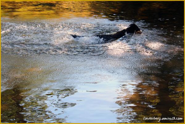 Taffy at Chico Creek