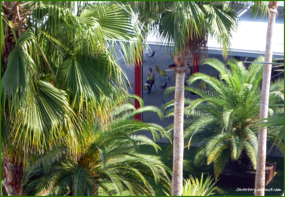 Museum palms